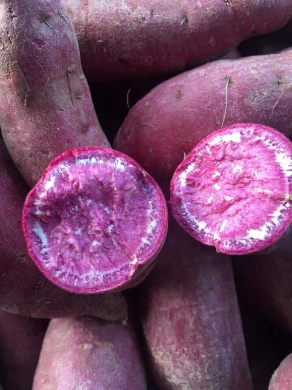 Purple Flesh Sweet Potato - Khoai Lang Tím - 紫皮地瓜