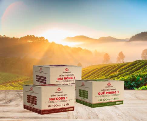 Hình ảnh thiết kế 3 thùng giống chanh leo Nafoods sản xuất hiện tại